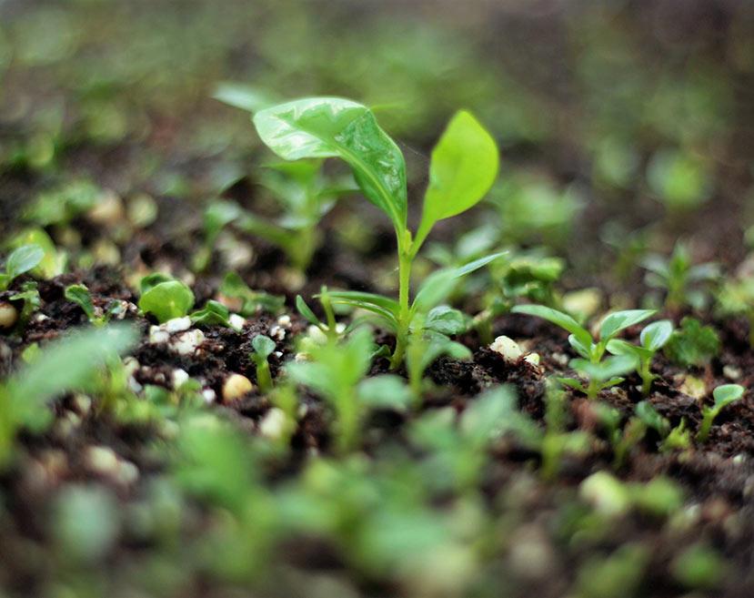 microplantas_sa1