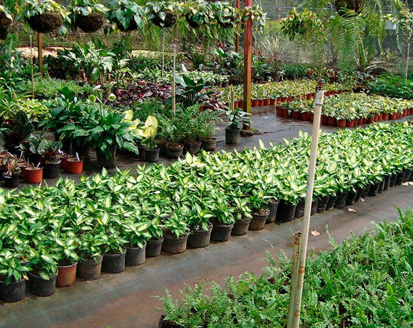 microplantas_sa14