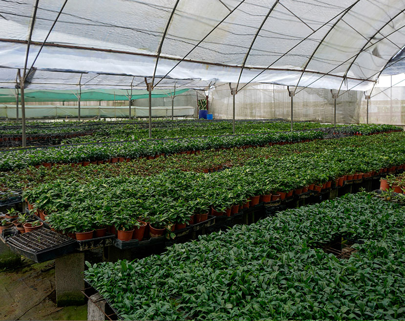 microplantas_sa15