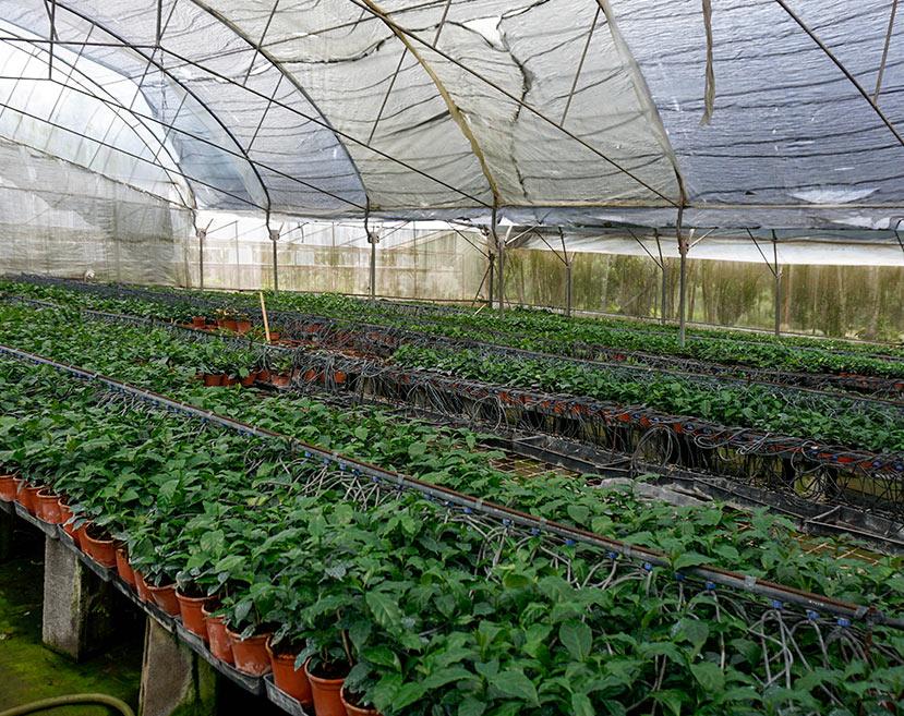 microplantas_sa16