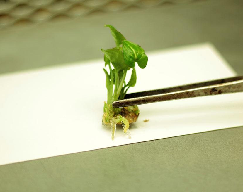 microplantas_sa44